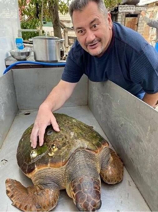 Удивительного морского обитателя обнаружили в скадовском море (ФОТО), фото-2