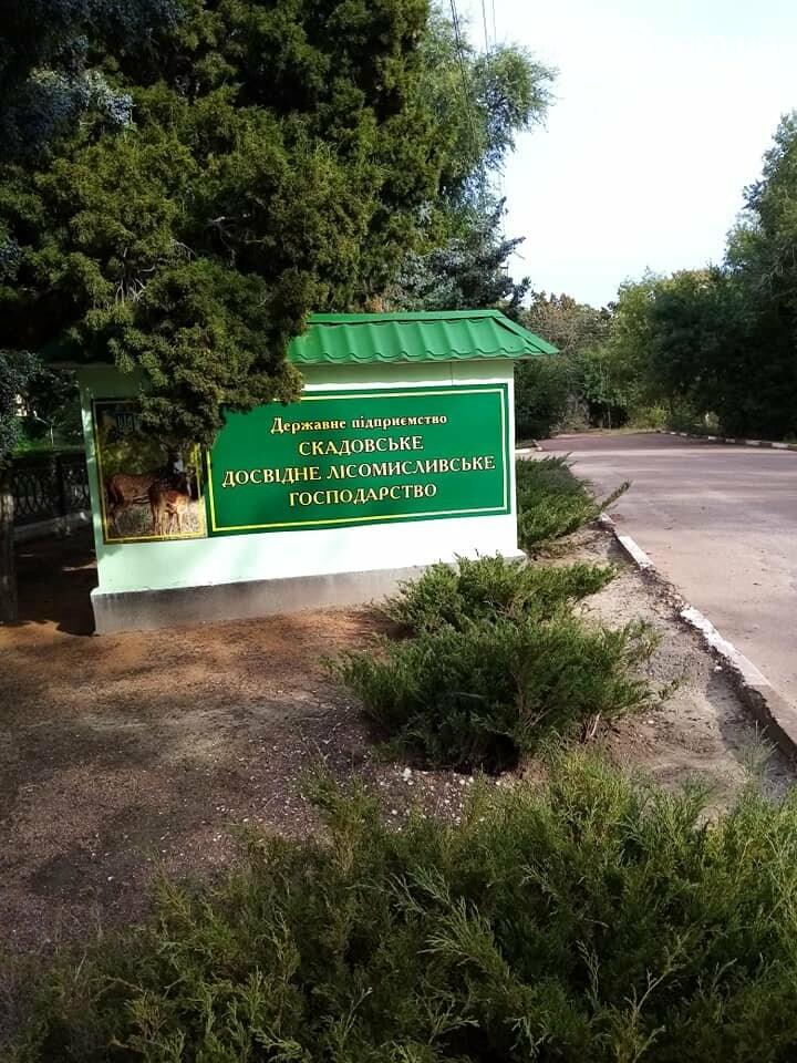 В Скадовске также присоединились к масштабной акции по озеленению, фото-5