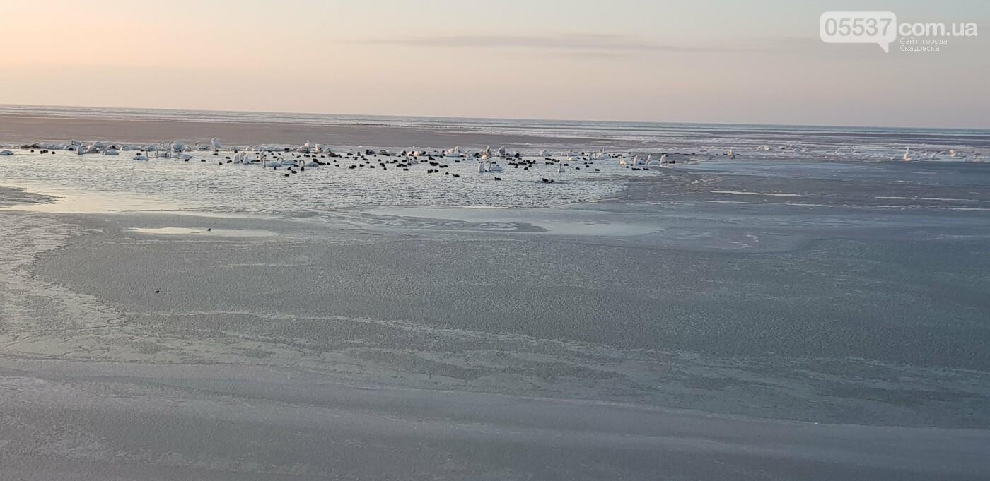 Лебеди облюбовали море в Скадовске (ФОТО), фото-1