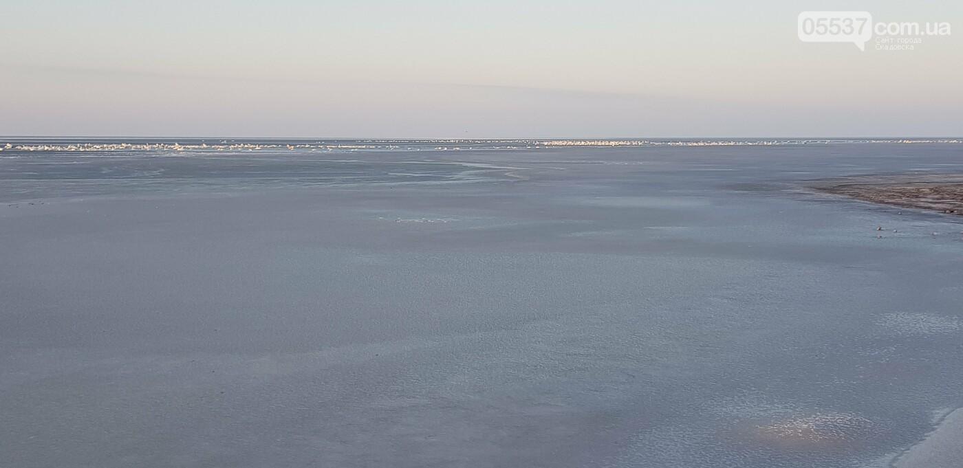 Лебеди облюбовали море в Скадовске (ФОТО), фото-3