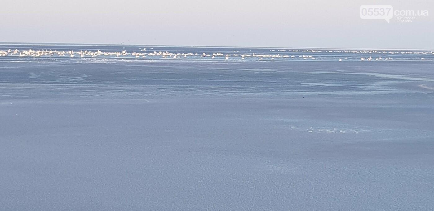 Лебеди облюбовали море в Скадовске (ФОТО), фото-4