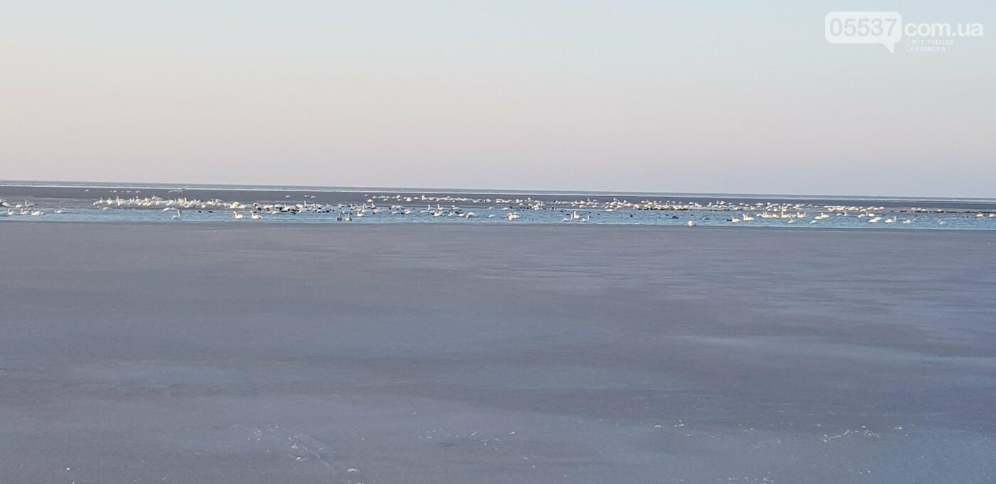 Лебеди облюбовали море в Скадовске (ФОТО), фото-8