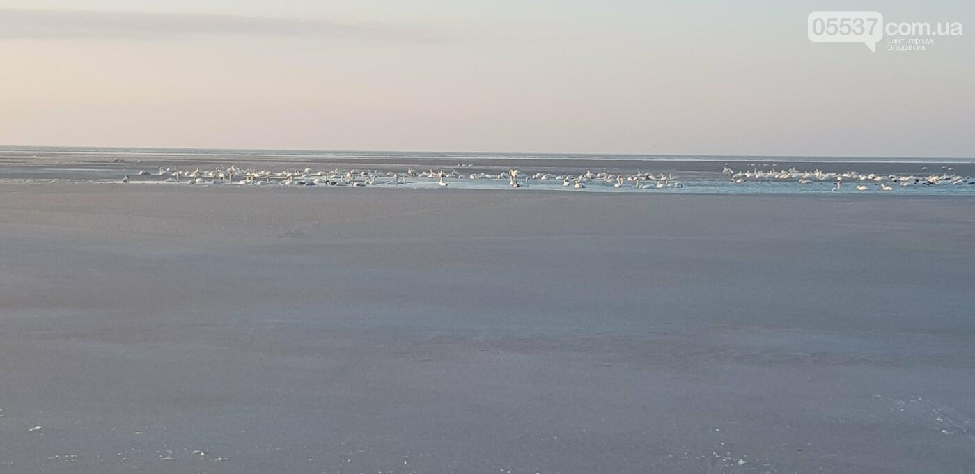 Лебеди облюбовали море в Скадовске (ФОТО), фото-9