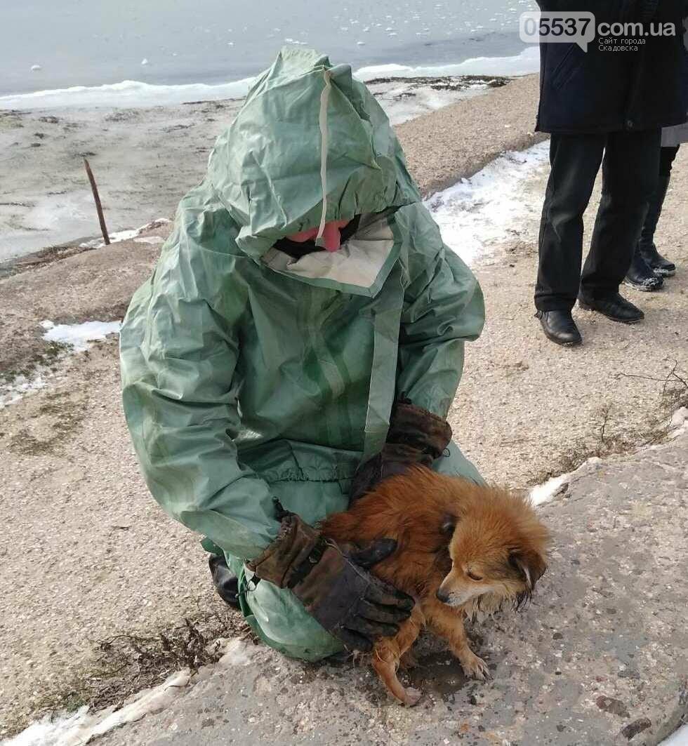 В Скадовске из ледяного плена спасали собаку, фото-2