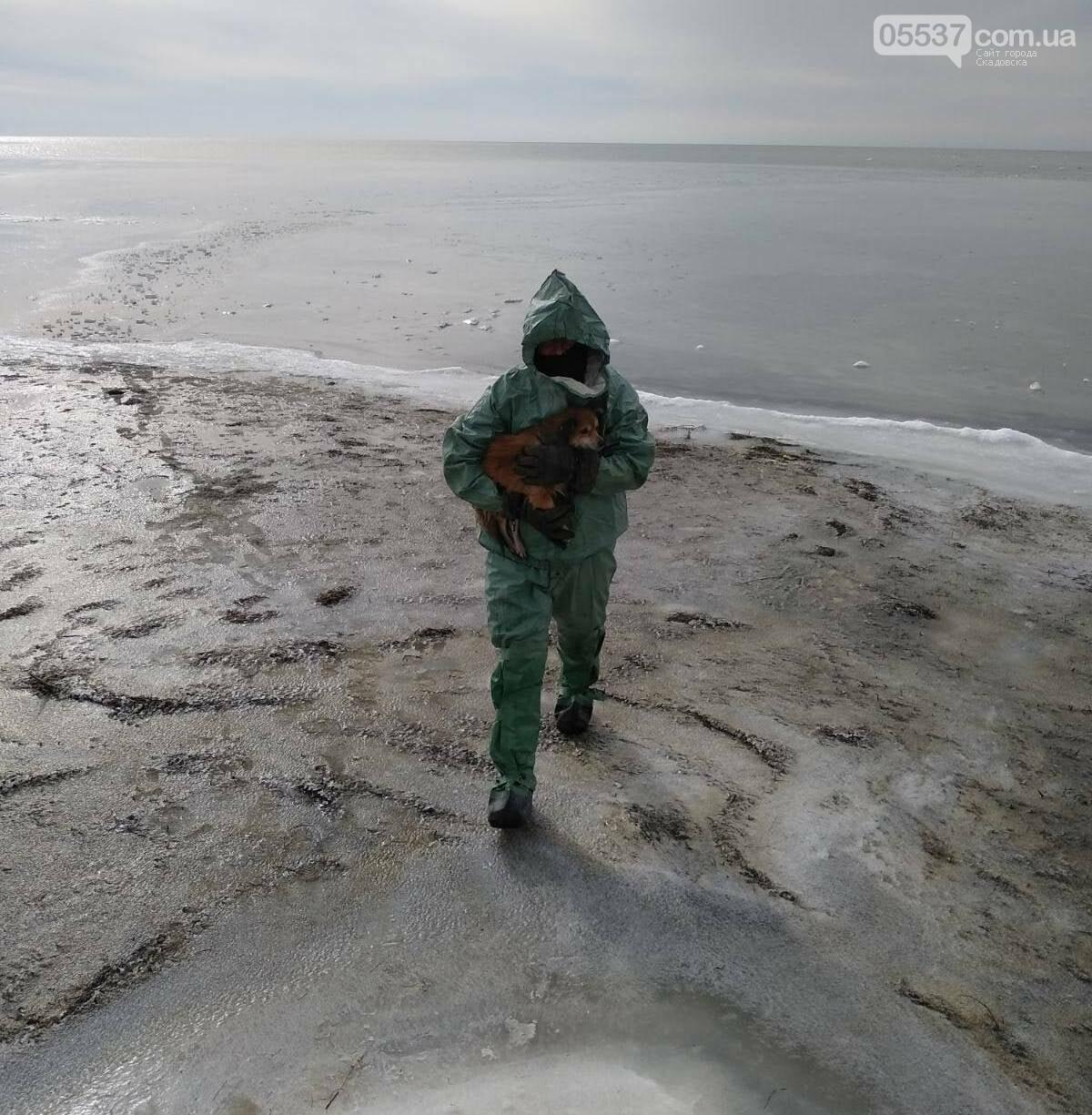 В Скадовске из ледяного плена спасали собаку, фото-1