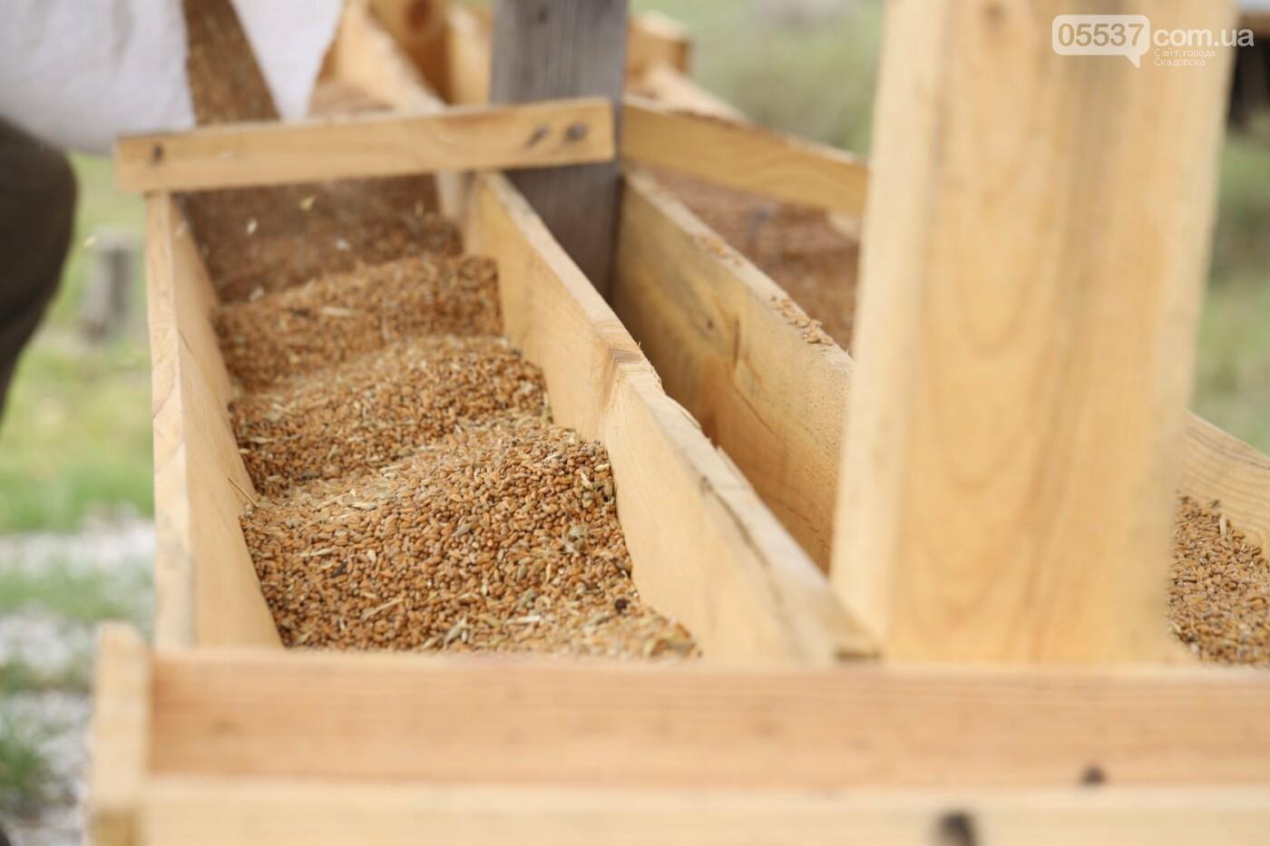 Как на скадовском Джарылгаче кормят животных (ФОТО), фото-5