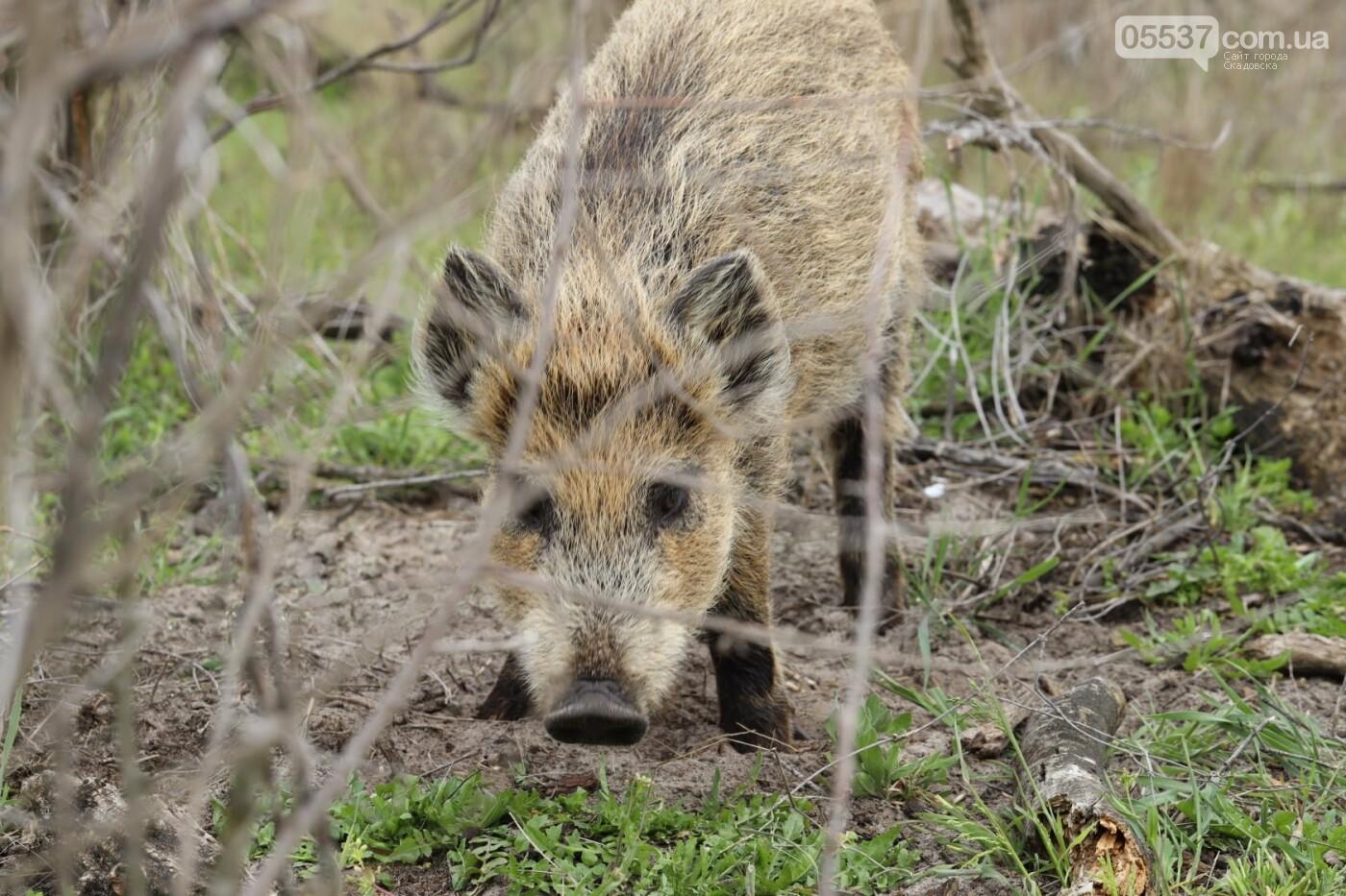 Как на скадовском Джарылгаче кормят животных (ФОТО), фото-6