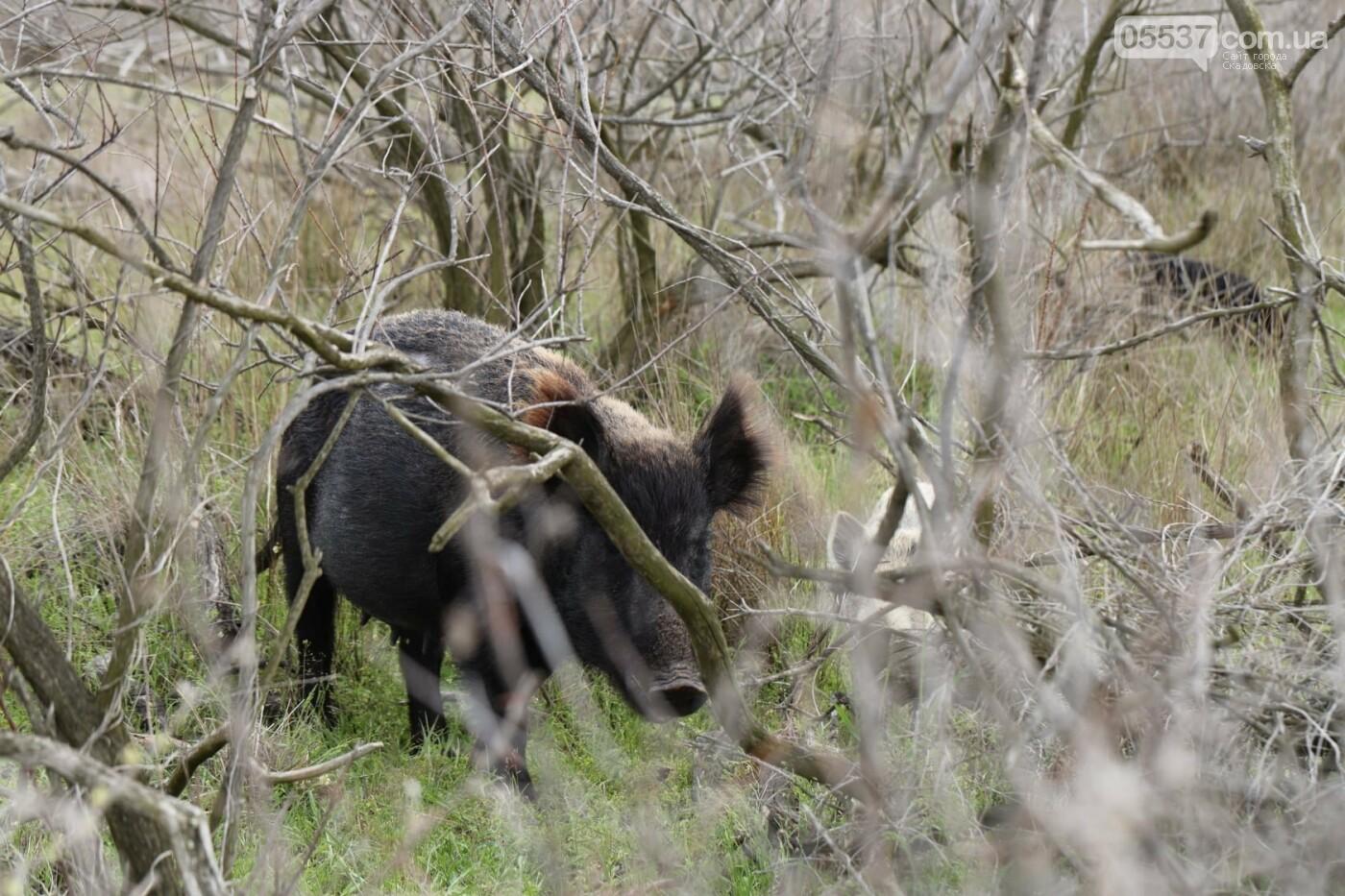 Как на скадовском Джарылгаче кормят животных (ФОТО), фото-11