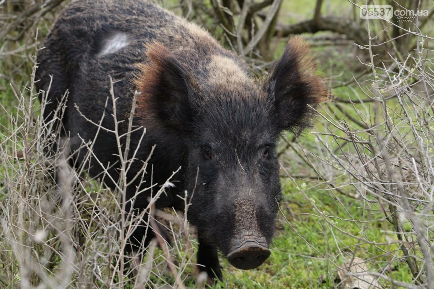 Как на скадовском Джарылгаче кормят животных (ФОТО), фото-12