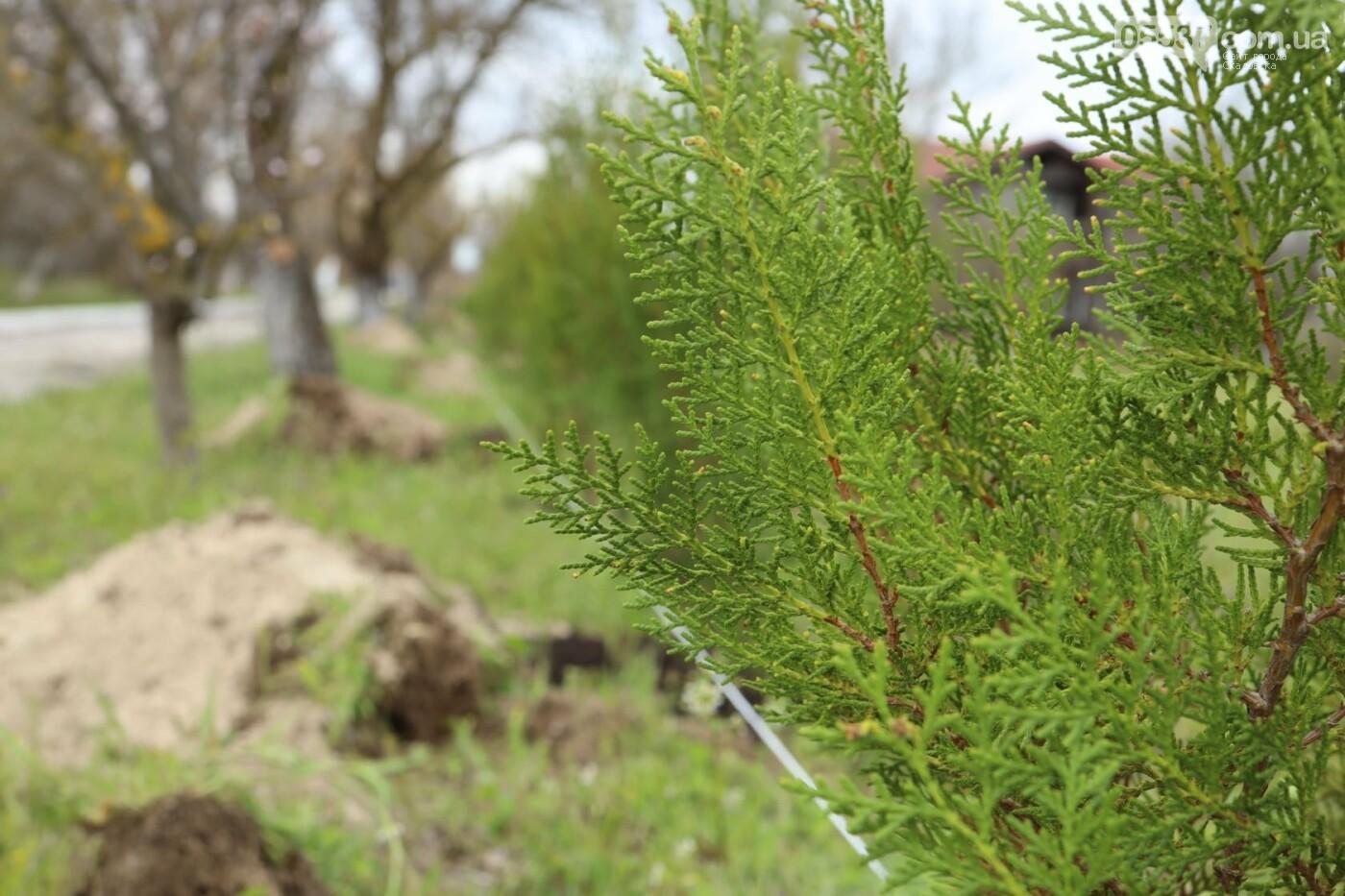 На скадовском Джарылгаче высадили деревья (ФОТО), фото-1