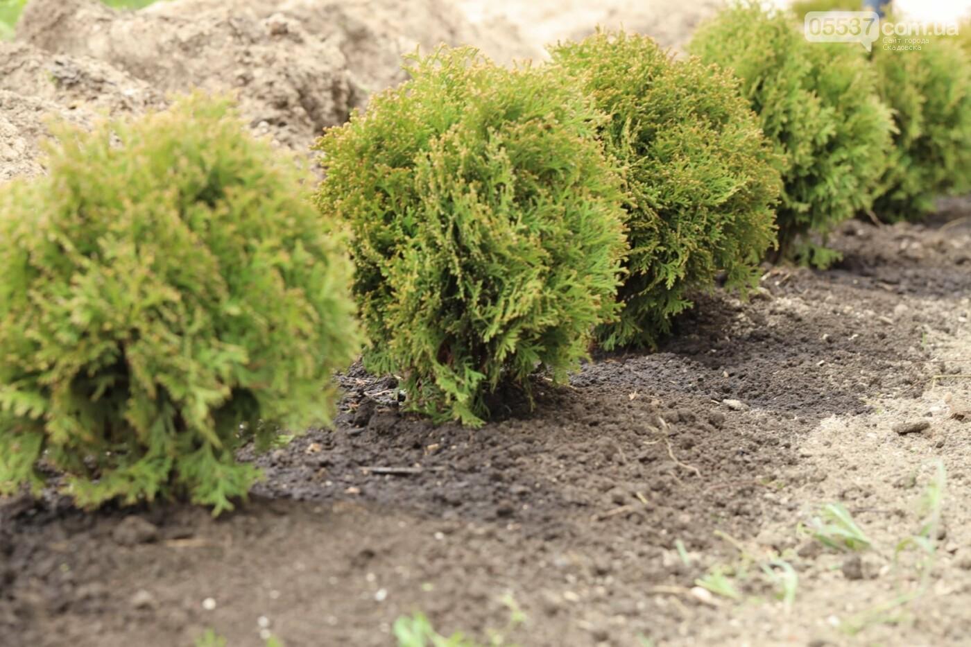 На скадовском Джарылгаче высадили деревья (ФОТО), фото-5